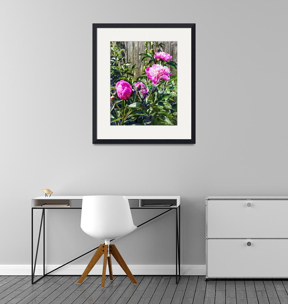 """""""Pink Peonies By Stockade Fence""""  by susansartgallery"""