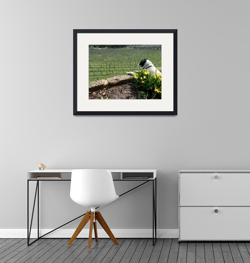 """""""Dog Watching Workers In Grape Vines""""  (2018) by almarphotography"""