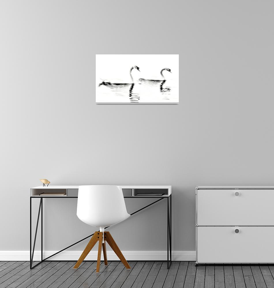 """Two Swans (High Contrast)""  (2010) by bavosiphotoart"