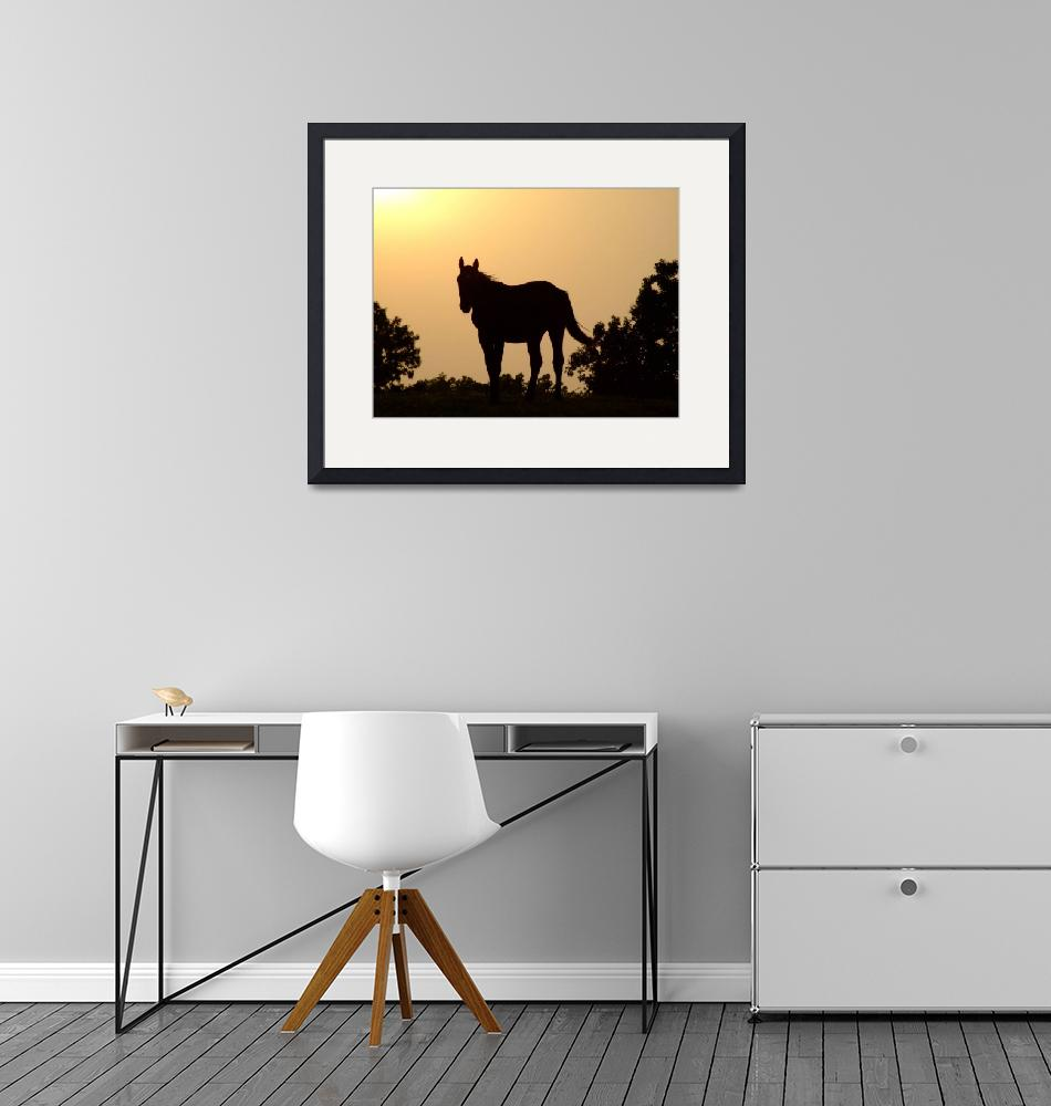 """""""Horse Silhouette Sunset""""  (2009) by Hartphotography"""