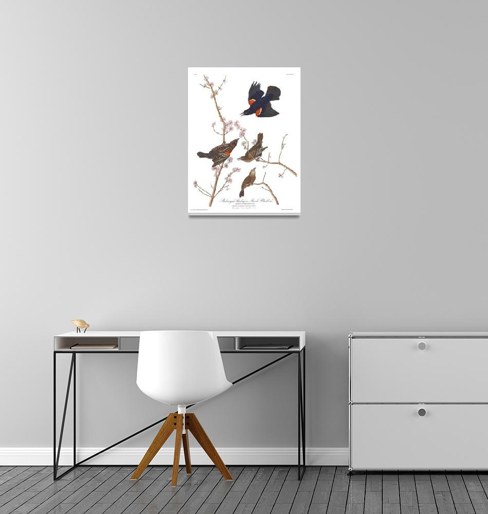 """""""Audubon Red Winged Starling,  Plate 67""""  by FineArtClassics"""