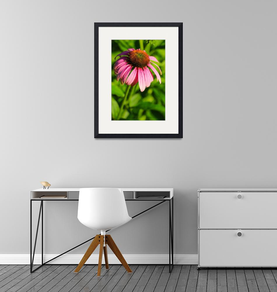 """""""Echinacea 1P""""  (2015) by angelophotos"""