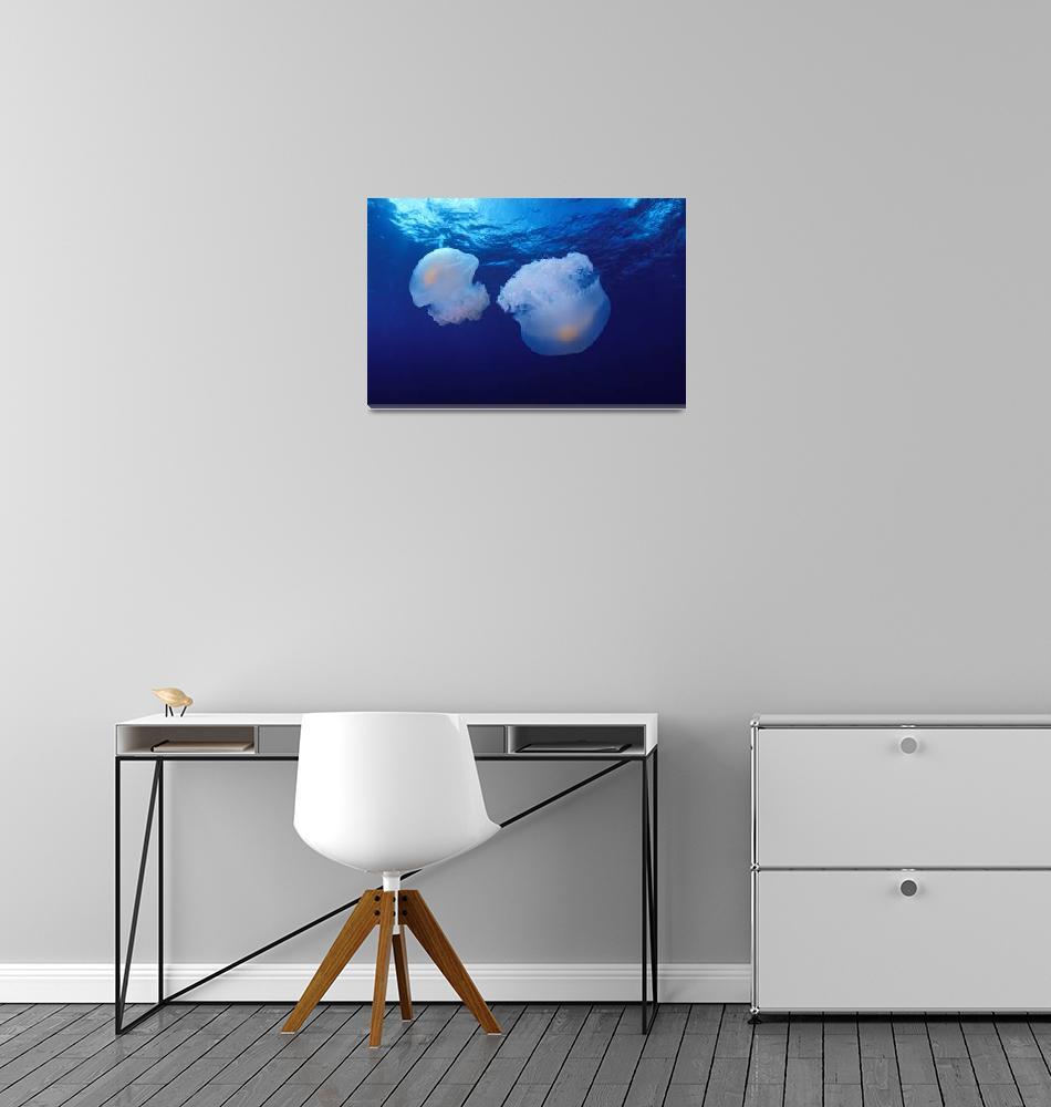 """Marshall Islands, Kwajalein Atoll, Pair Of Jellyfi""  by DesignPics"
