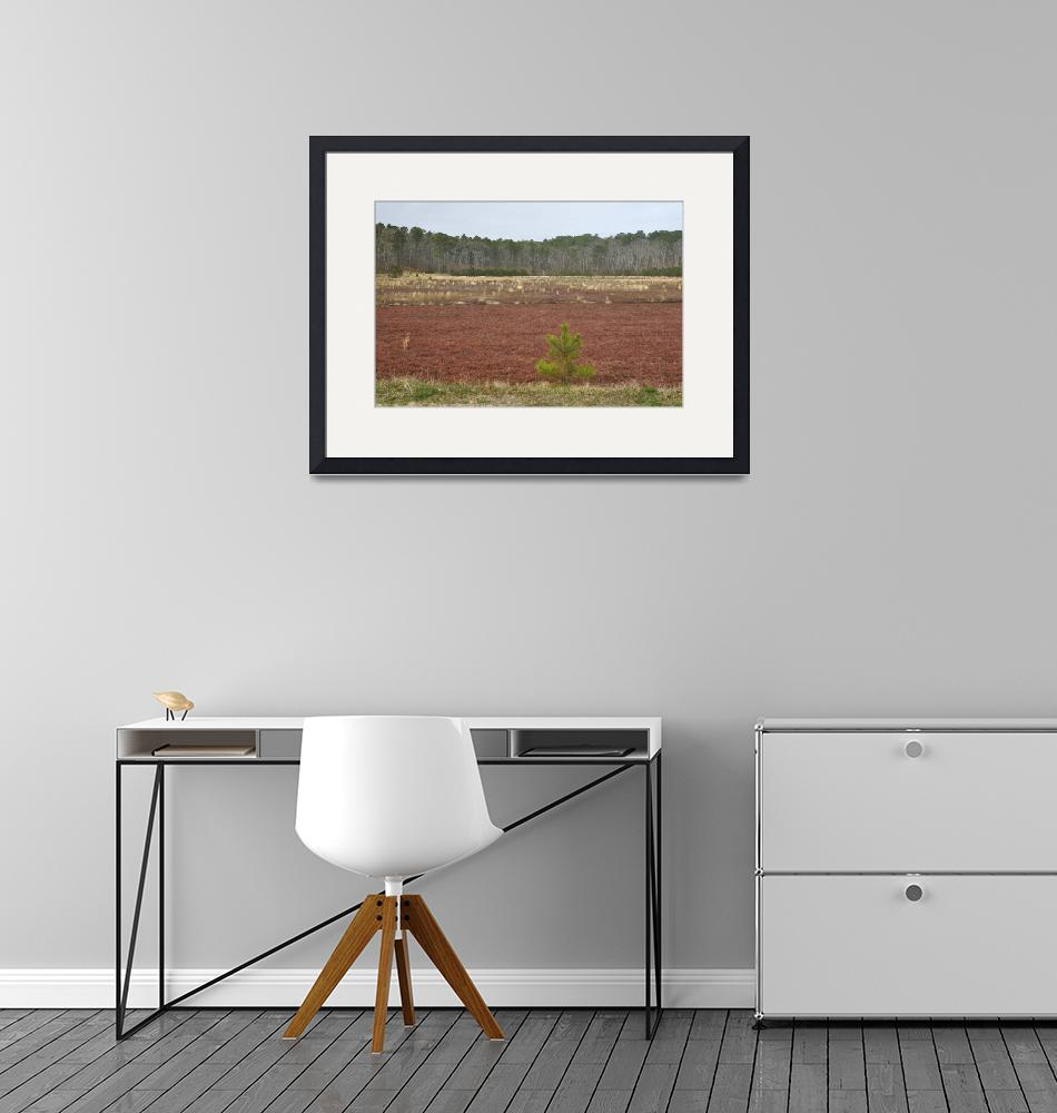 """""""Cape Cod Cranberry Bog""""  (2019) by LukeMoore"""