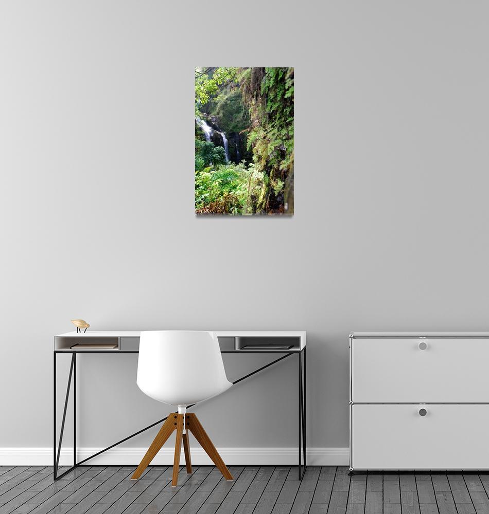 """Maui Rainforest""  (2009) by MattParry"