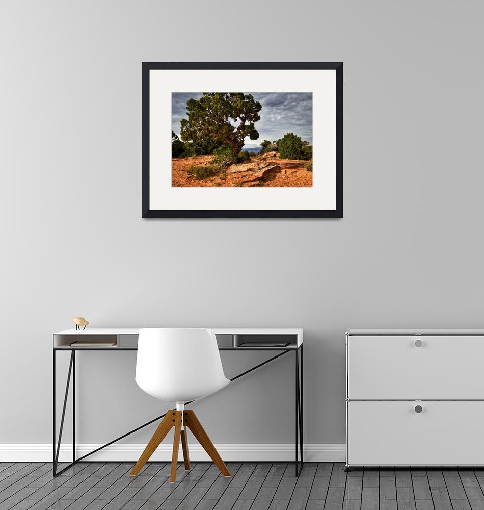 """""""Colorado National Monument wall art""""  by judimage"""