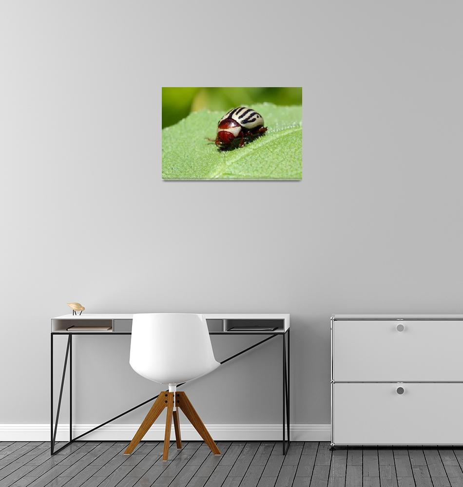 """Sunflower Beetle""  (2011) by teresazieba"