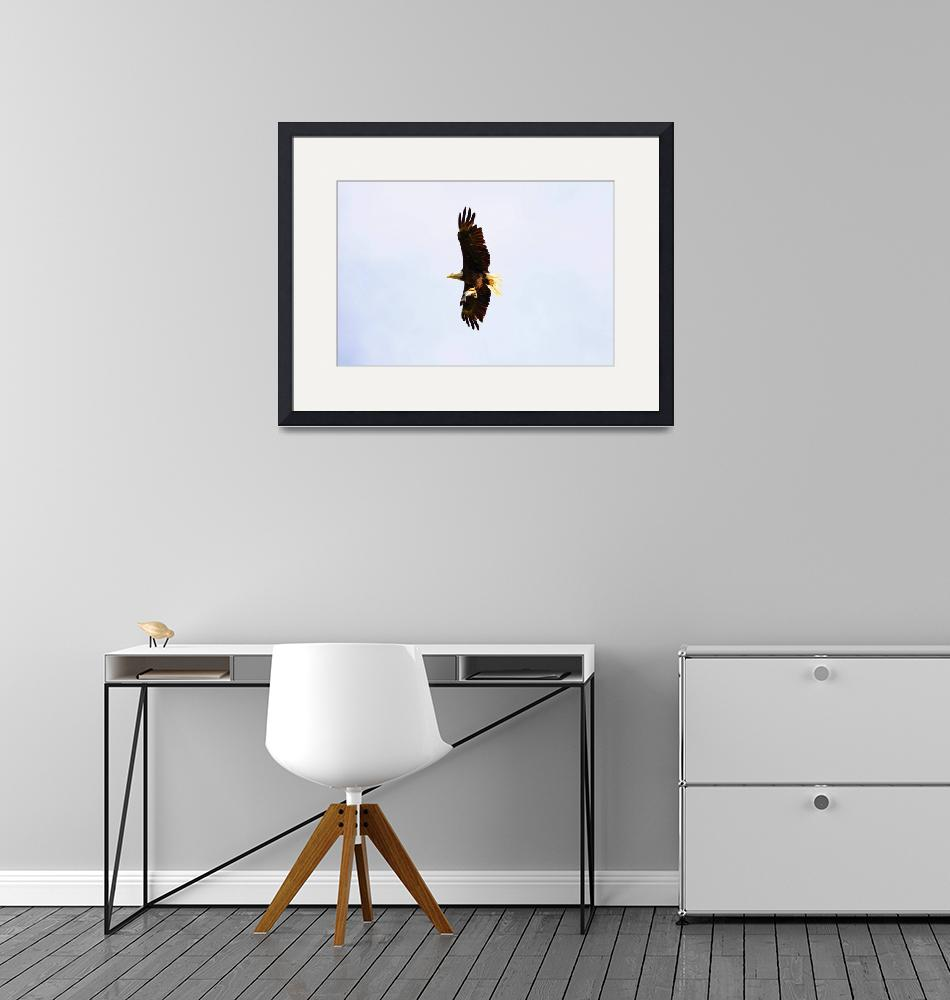 """""""Eagle in Flight with a Fish""""  (2009) by jones3006"""