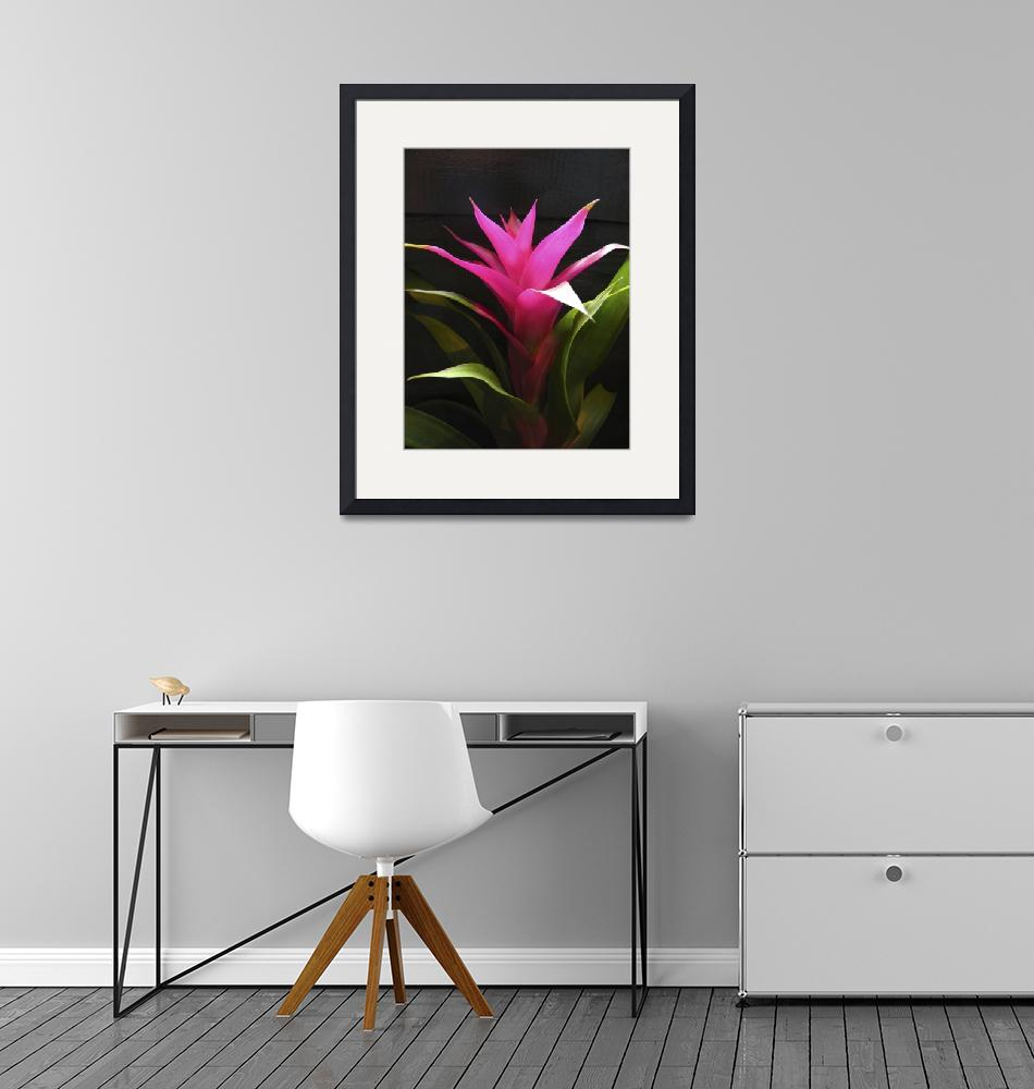 """Pink Bromeliad""  (2013) by sonnyhoodphotography"