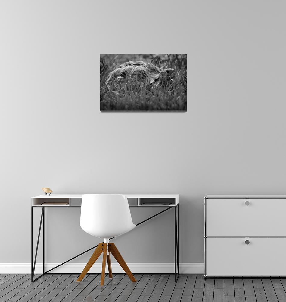 """African Spurred Tortoise Black and White""  (2016) by KsWorldArt"