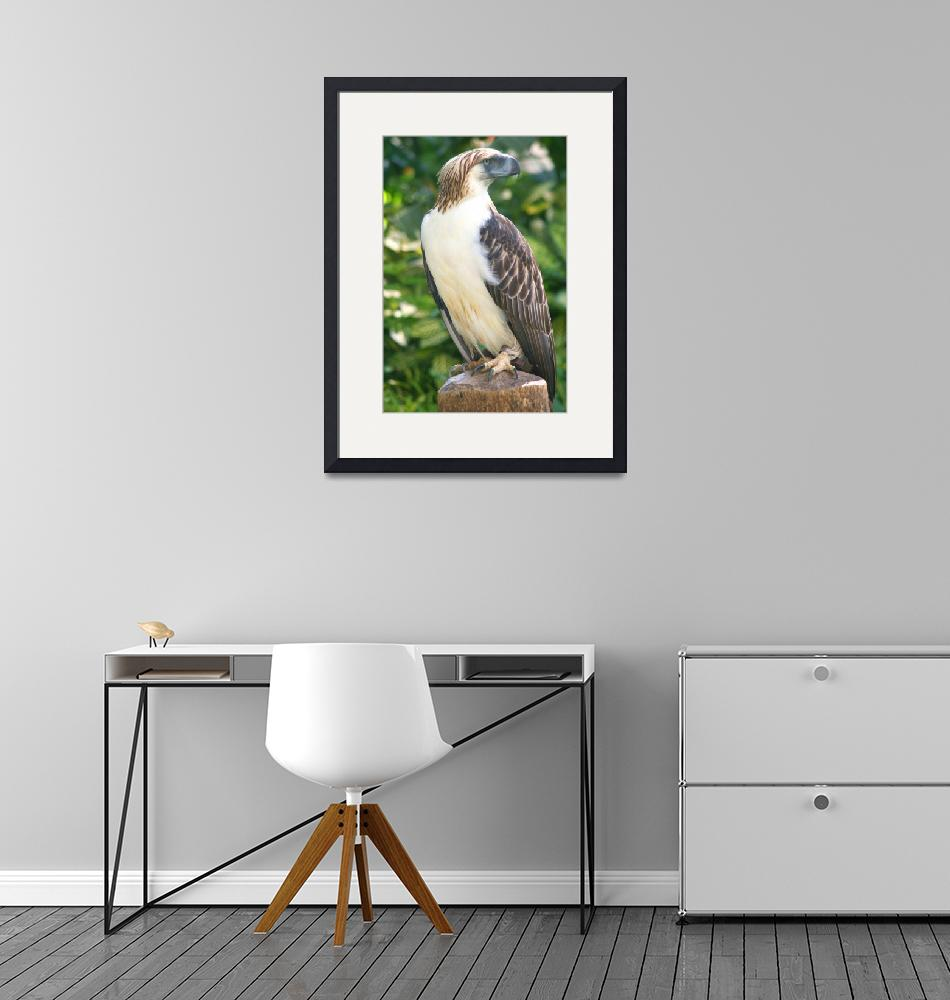 """""""Davao - Philippine Eagle""""  (2008) by letlet"""