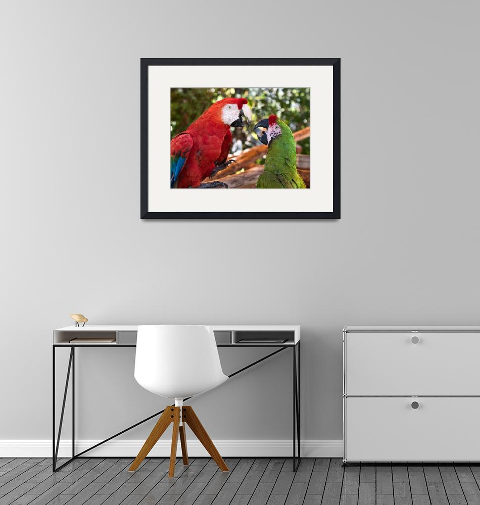 """Macaw Chat""  (2011) by mjphoto-graphics"