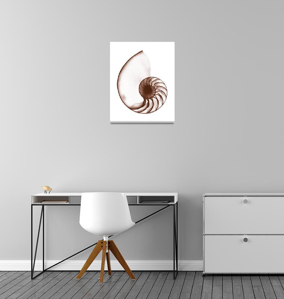 """Chambered Nautilus Shell""  (1973) by DennisMash"