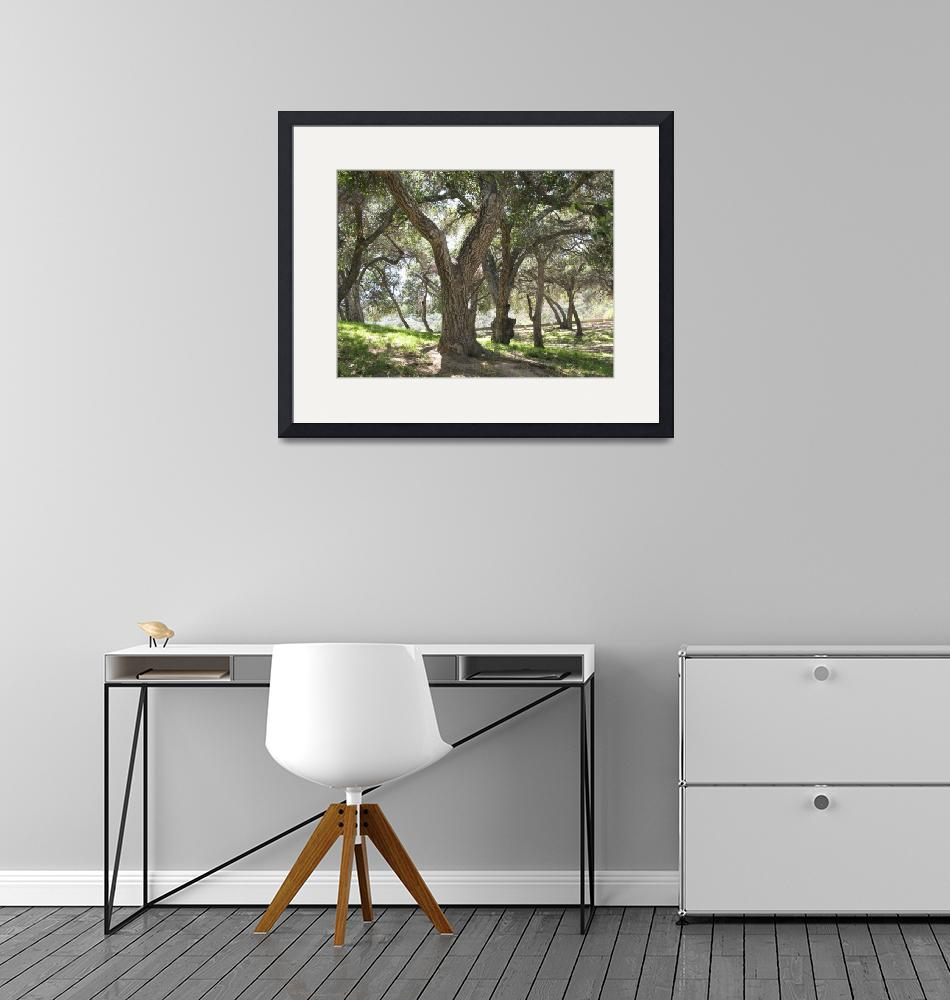 """""""Griffith Park Trees 1""""  by DonnaGrayson"""