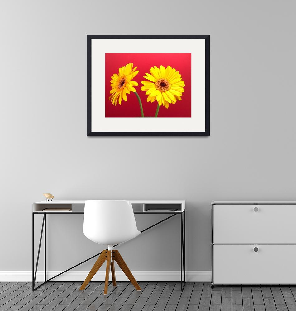 """Yellow Gerbera Daisies Delight On Red""  (2006) by Infomages"