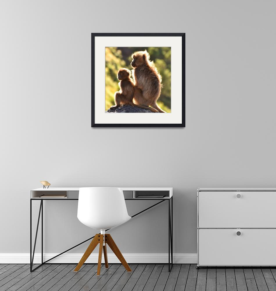 """""""Two young Gelada baboons sitting on a rock, Ethiop""""  (2018) by Mickcarr"""