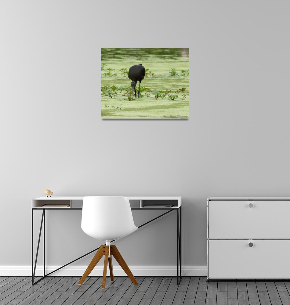 """""""Glossy Ibis""""  (2012) by WildAboutNaturePhotography"""