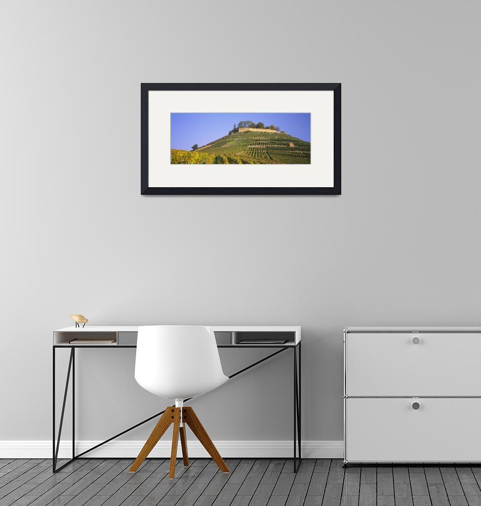 """""""Vineyards on a hill""""  by Panoramic_Images"""