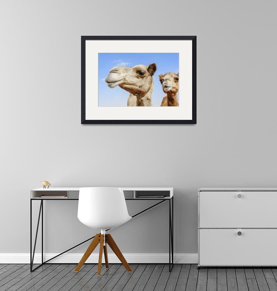 """Camels portraits""  (2015) by DXB013"