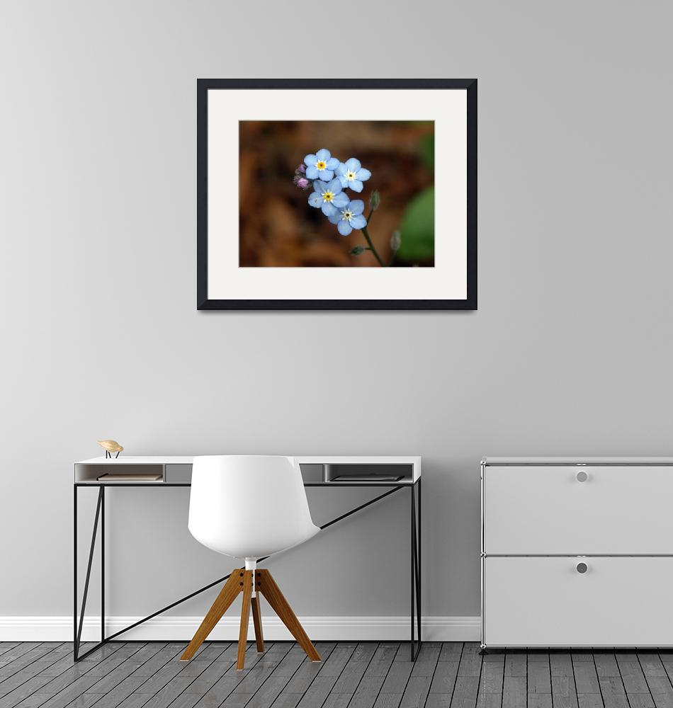 """""""Blue Minature Flowers""""  by mbryan777"""