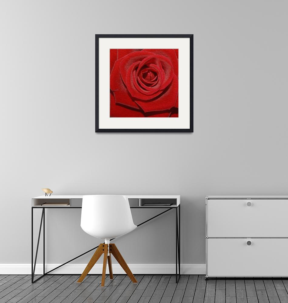 """""""Rose""""  by AndreaMeyer"""