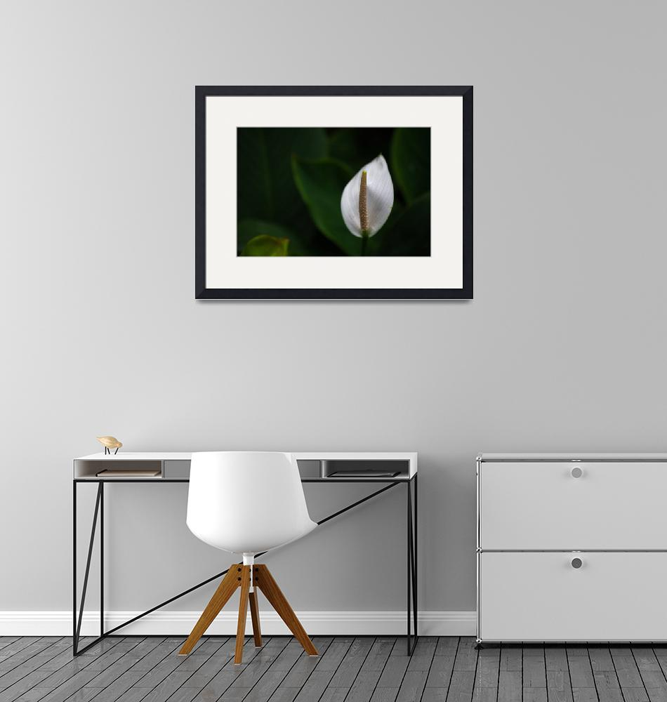 """""""Alone Lily""""  (2018) by Mun_Sing"""