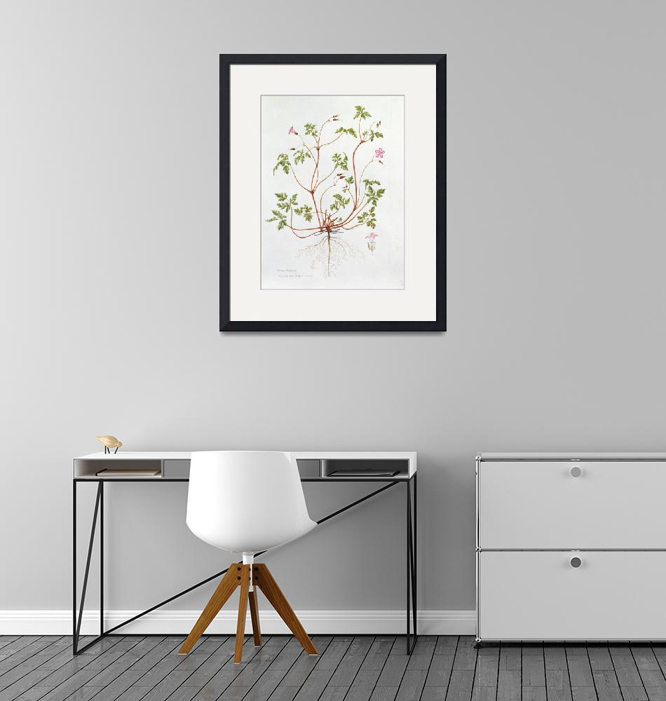 """Herb Robert (w/c on paper)"" by fineartmasters"
