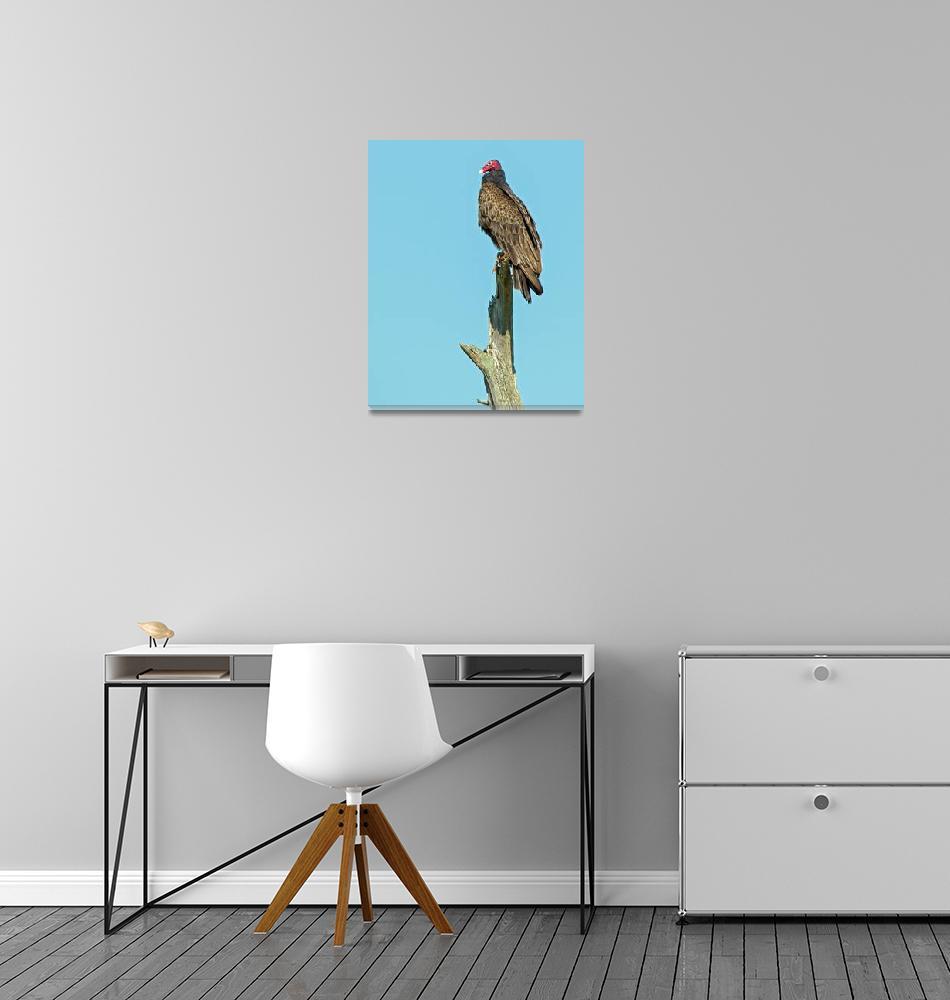 """Turkey Vulture on Dead Snag""  (2013) by NatureAsArt"
