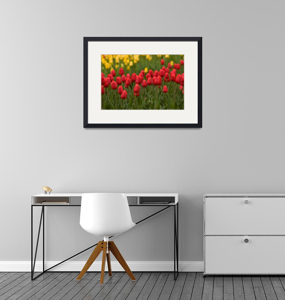 """""""Red and Yellow Tulips""""  (2006) by dennisflood"""