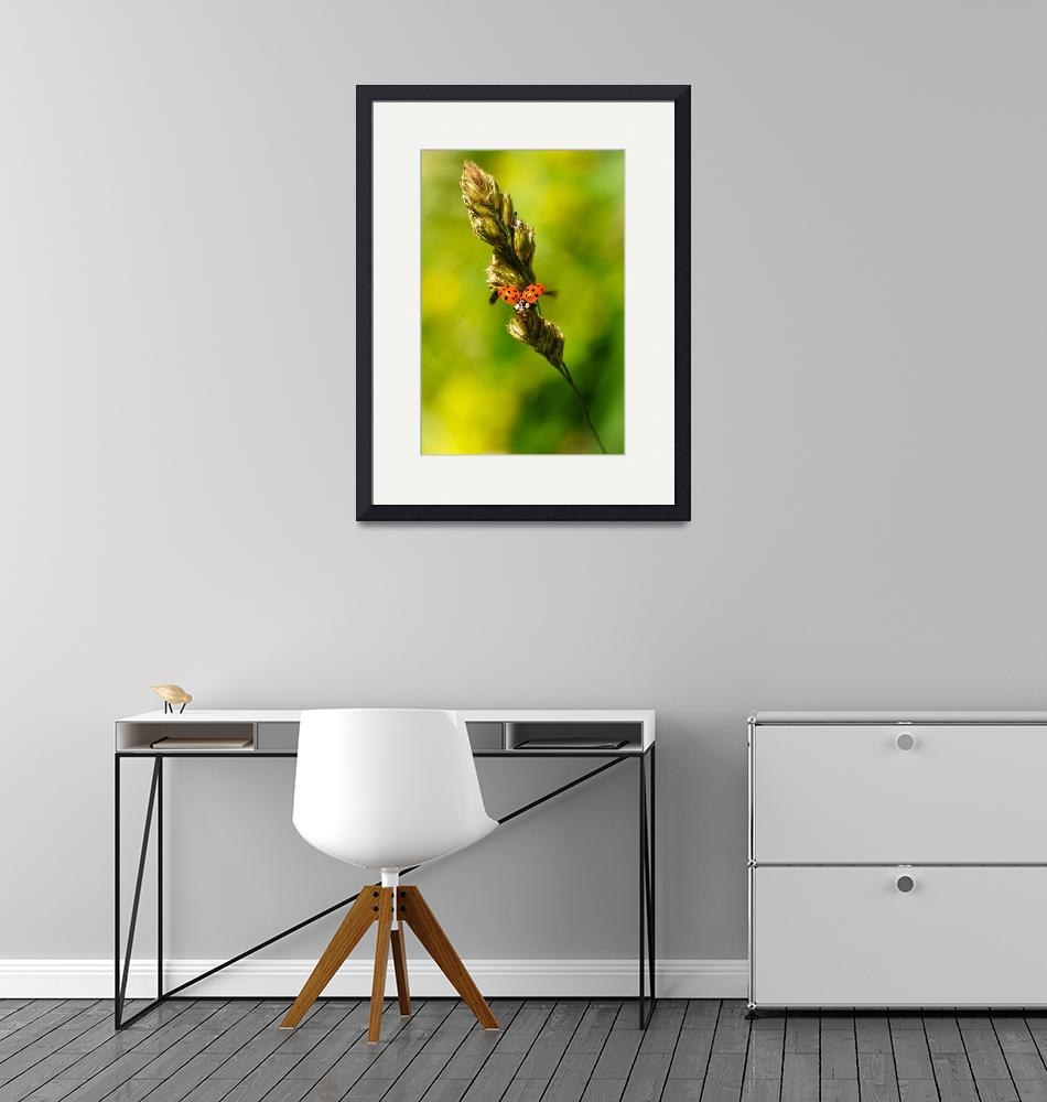 """""""Ladybird taking off""""  by ChrisRabe"""
