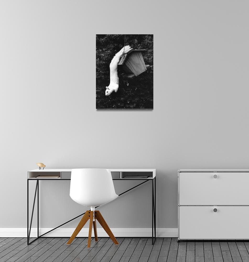 """""""White Squirrel B&W""""  by evansonart"""
