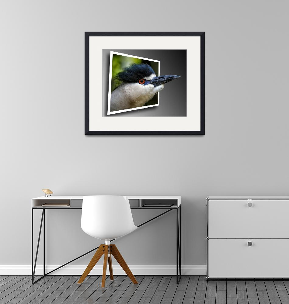 """""""Black Crowned Night Heron Out Of Bounds""""  by travel"""