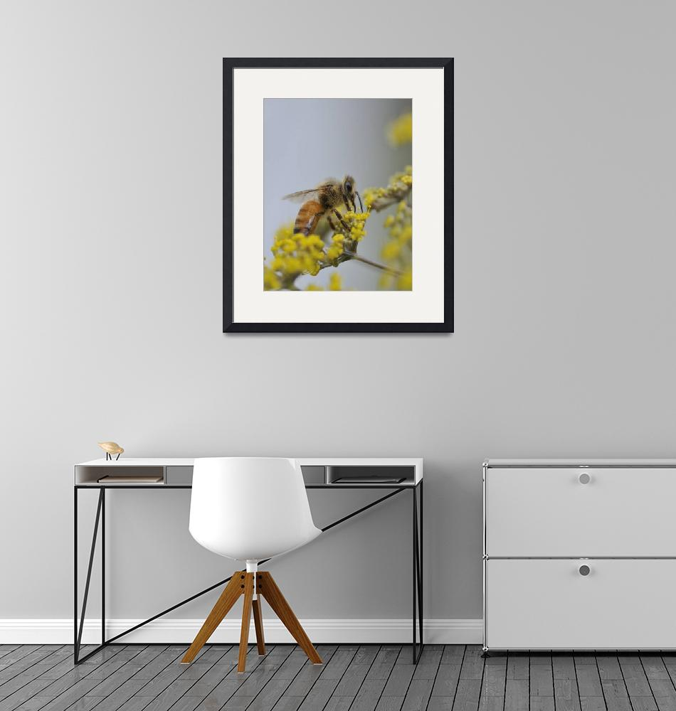 """""""Honey Bee Feeds On Yellow Fennel Flower 2""""  by McallenPhotography"""