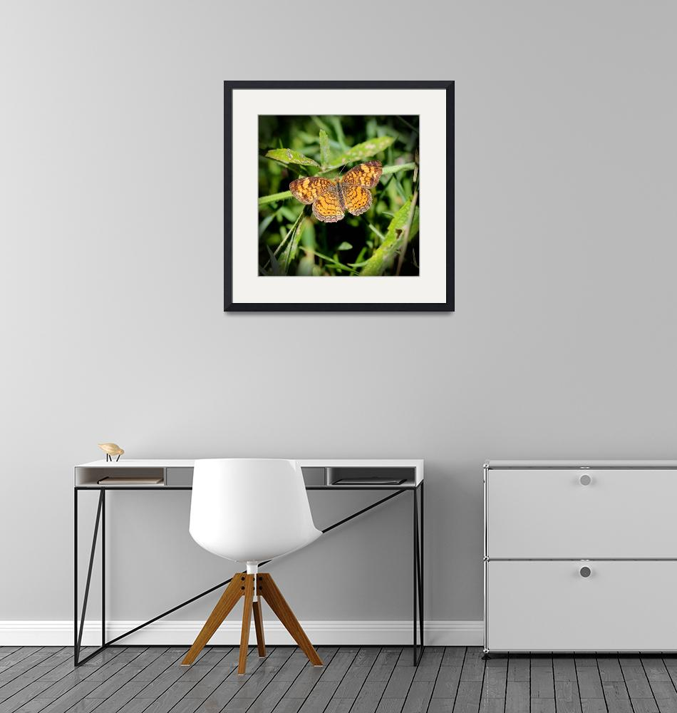 """""""Pearl Crescent Butterfly 2016""""  (2016) by KsWorldArt"""