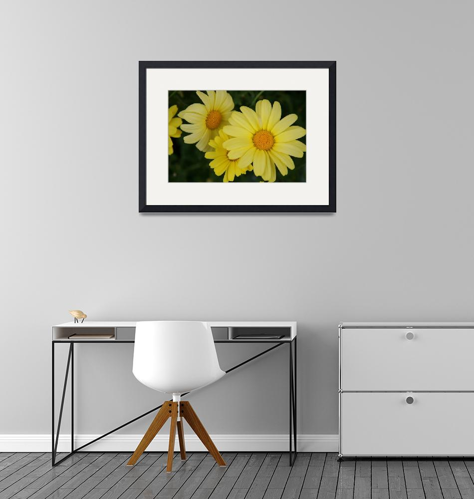 """""""Yellow Dasies""""  by SEEtography"""