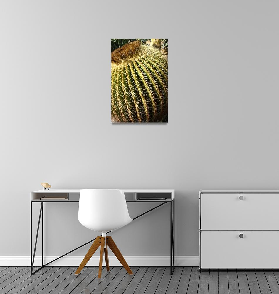 """""""Large Round Cactus""""  (2007) by ispyimagination"""