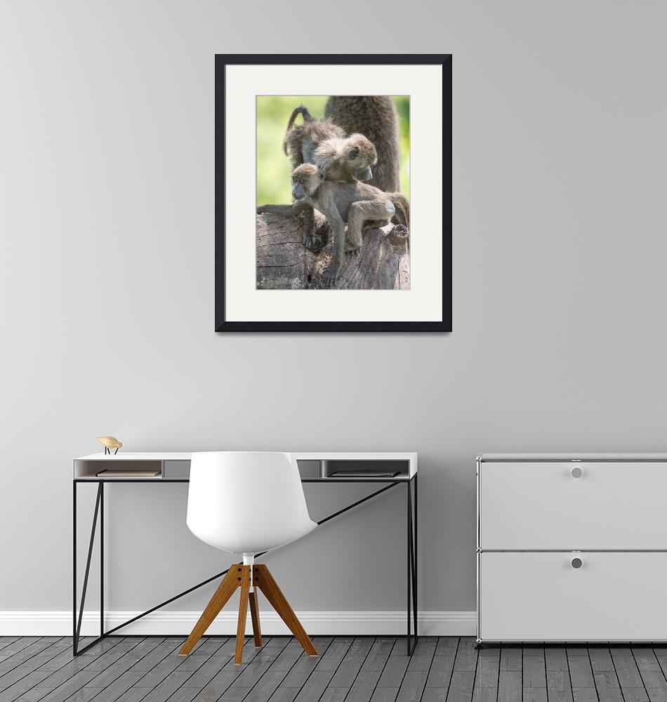 """baboongrouping5""  (2014) by SederquistPhotography"