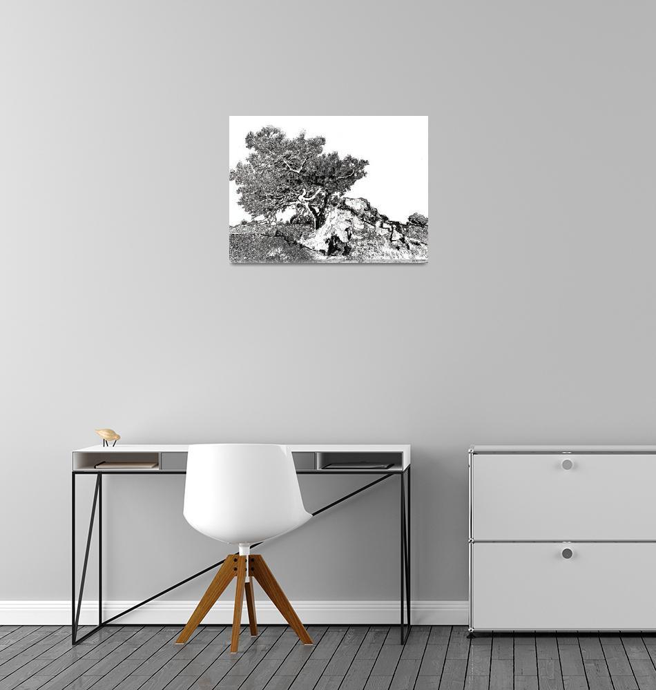 """Torrey pine tree by RD Riccoboni drawing""  (2008) by RDRiccoboni"