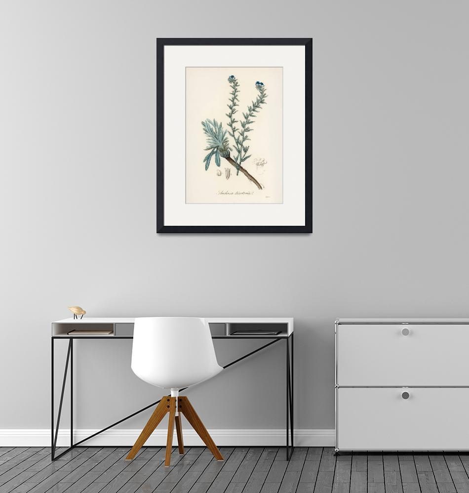 """""""Vintage Botanical Common Bugloss"""" by FineArtClassics"""