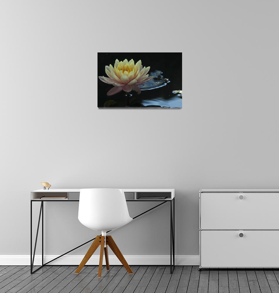 """""""Lotus""""  (2010) by BonnieLandry"""