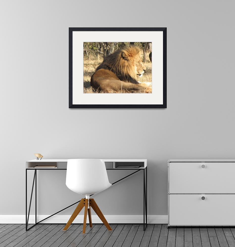 """""""The majestic king of the jungle""""  (2007) by seema"""