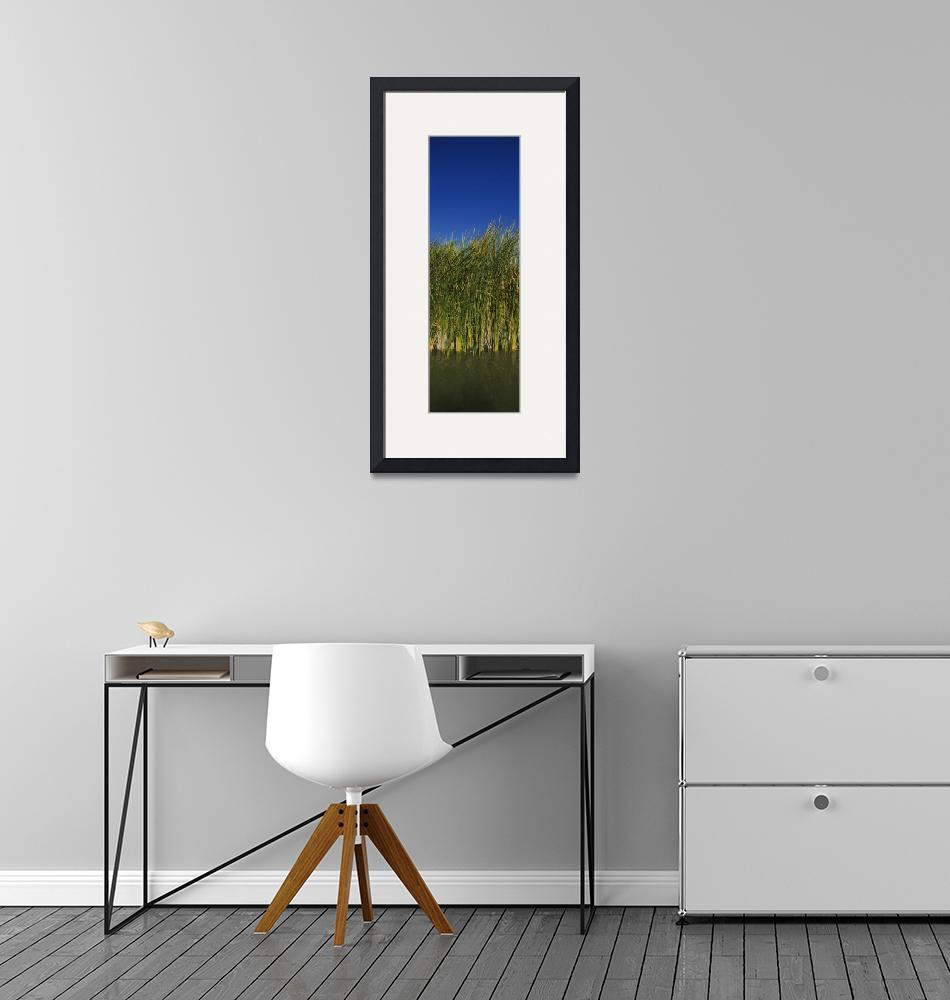 """""""Reeds in a river""""  by Panoramic_Images"""