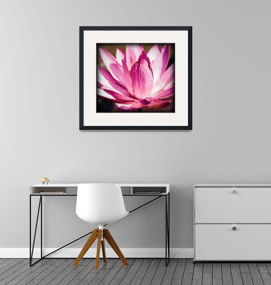 """""""Bright Pink Water Lily""""  (2009) by johncorney"""