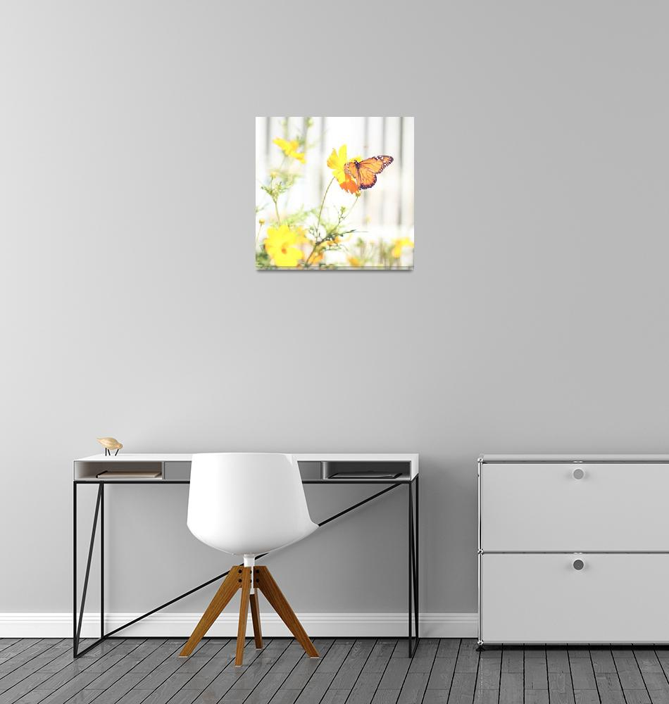 """Monarch Butterfly""  (2011) by annatheodora"