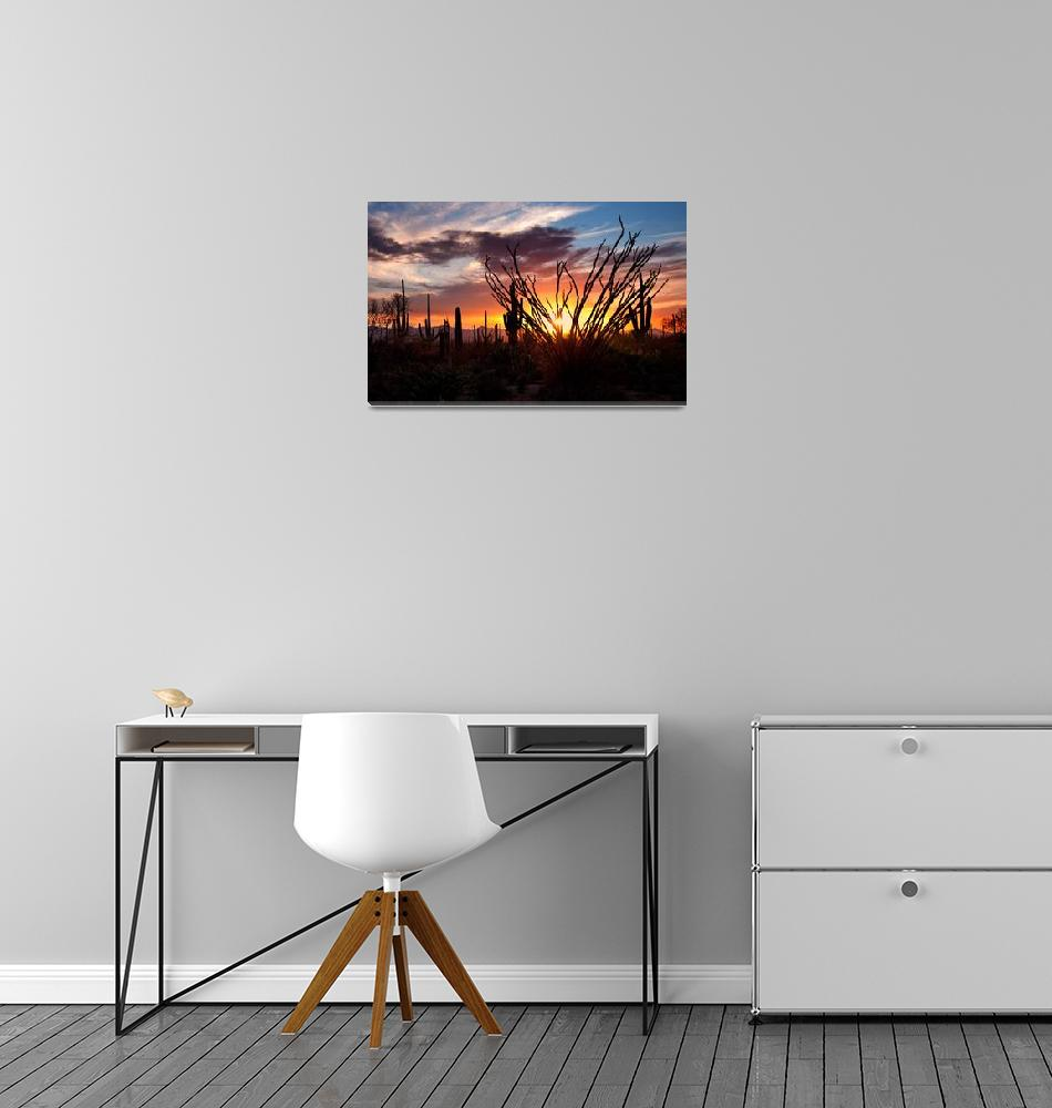 """Saguaro National Park, Arizona""  (2009) by pbk"