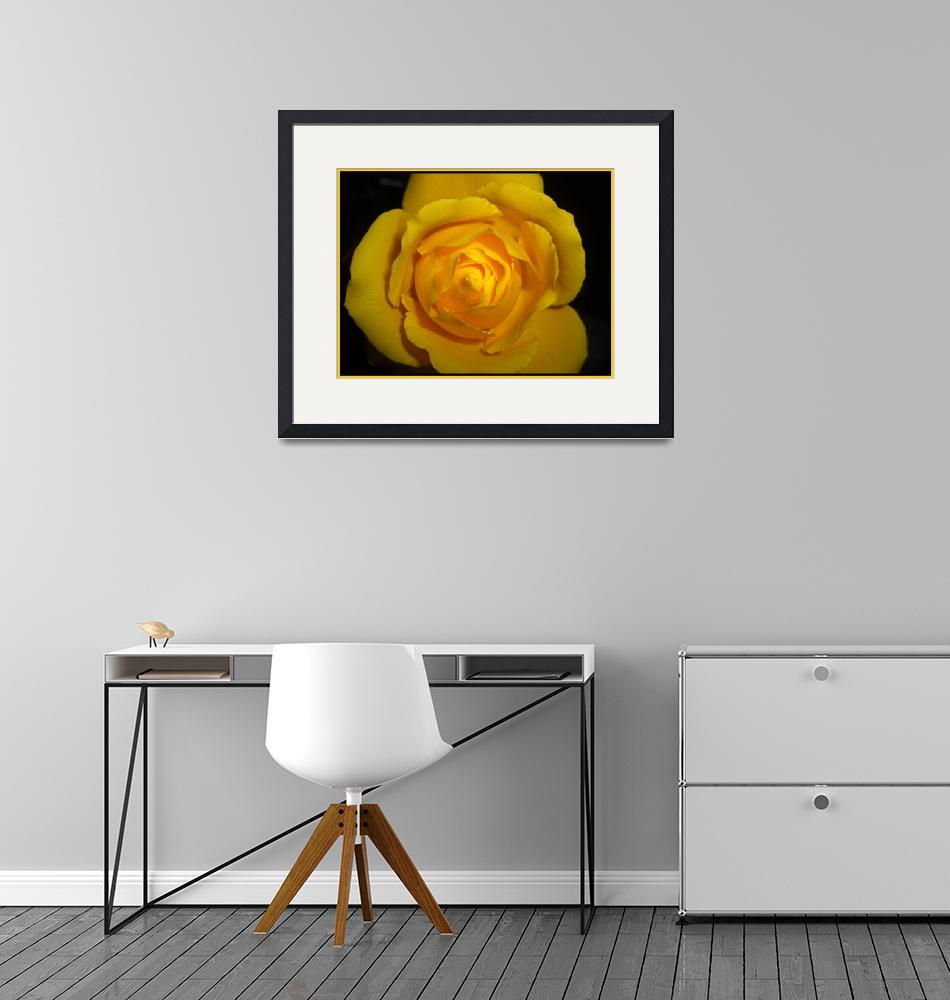 """yellow rose""  by ccmerino"