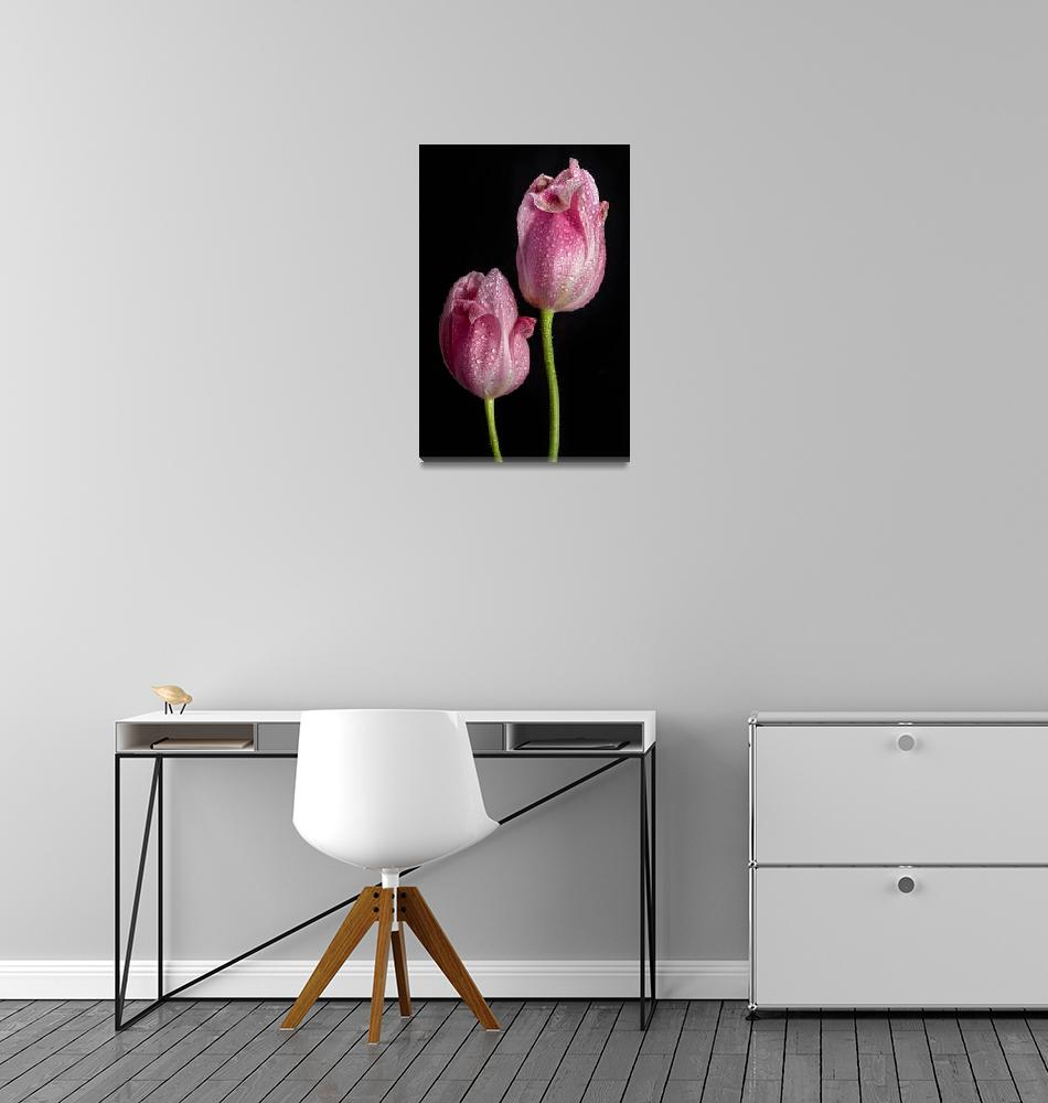 """""""Two Pink Tulips""""  (2015) by lightningman"""