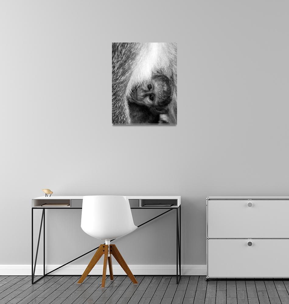 """Baby Monkey""  by SimonFenton"