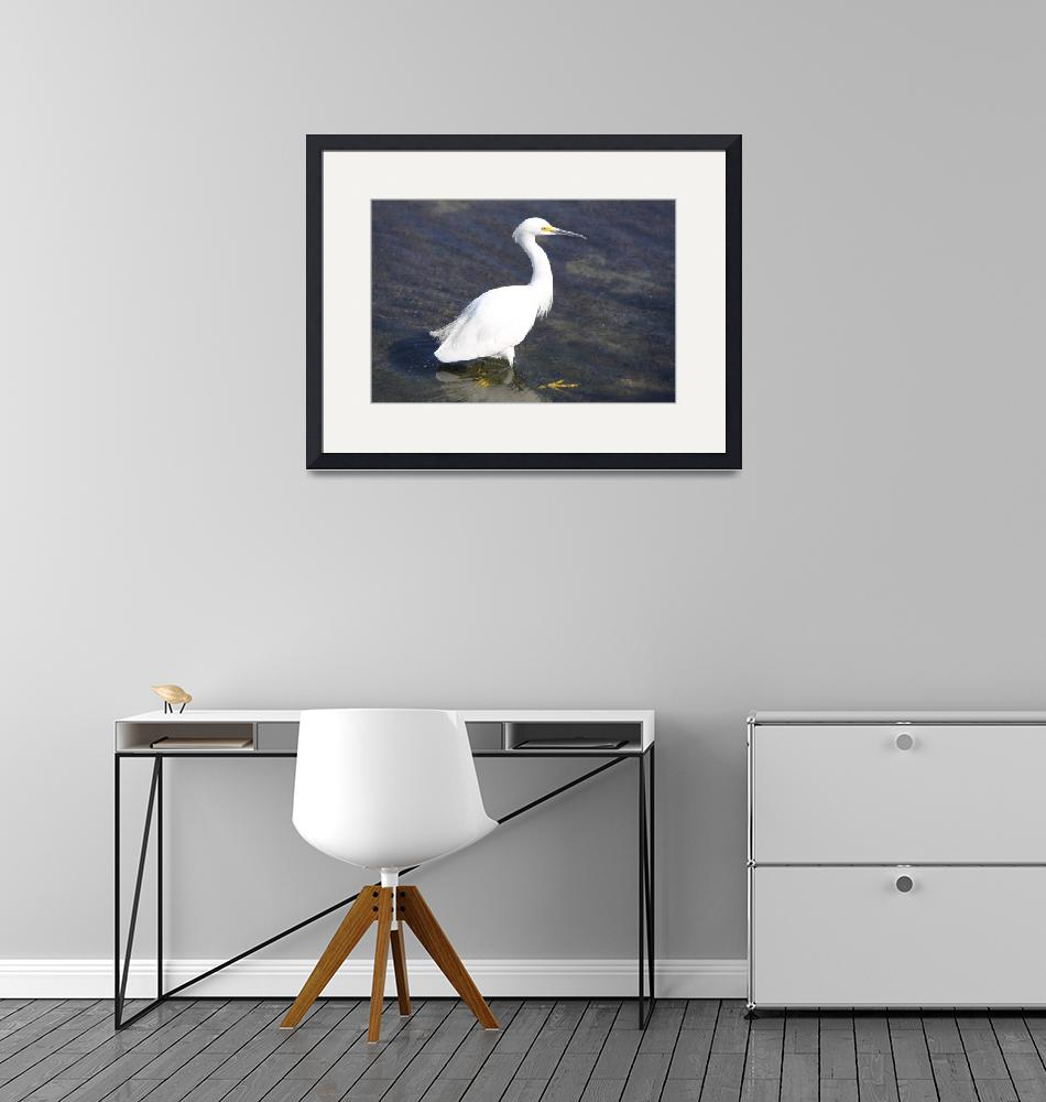 """""""Snowy Egret""""  by DonBakerPhotography"""