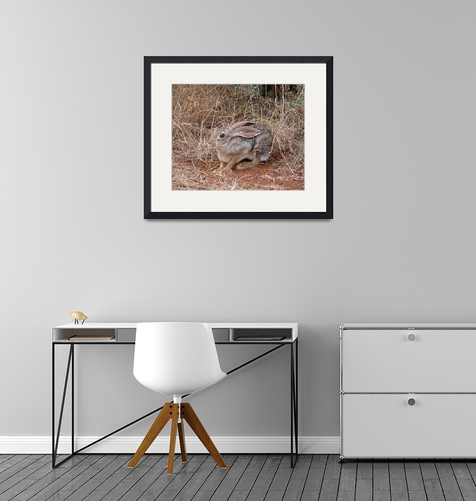 """""""African Hare""""  (2007) by stockphotos"""